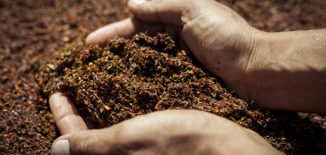 Alter Eco | Rooibos, the red Gold