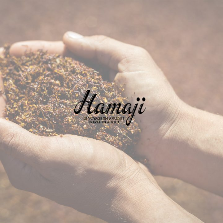 Hamaji Magazine | Rooibos, the south african red Gold
